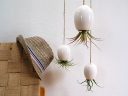 Hanging_Air_Plant_Pods_01
