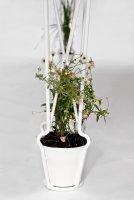 Plantable_06