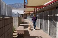 Palm_Springs_Animal_Care_Facility_20